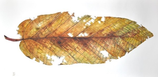 Idoline Duke, Big Leaf Early Drop, Watercolor on Paper, 27x53, 2015